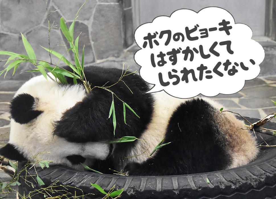 「僕の病気恥ずかしくて知られたくない」と目をふさぐパンダ