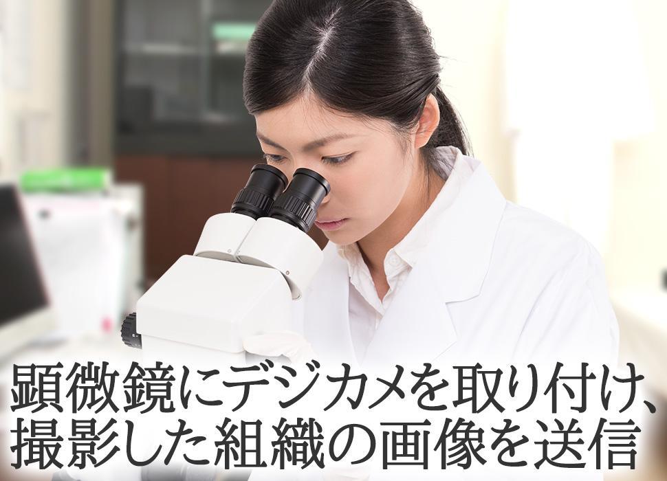 顕微鏡にデジカメを取り付け、撮影した組織の画像を送信